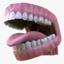 teeth 3D models