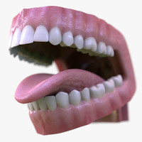 3d model dental mouth realistic tongue