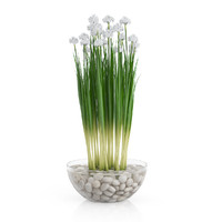 white flowers glass vase max
