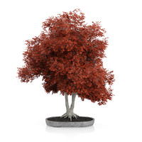 red bonsai tree 3d max