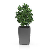3d model of plant rectangular pot