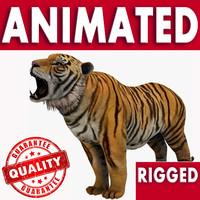 3d model wild tiger