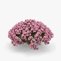 max azalea flower