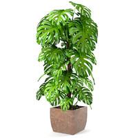 plant monstera 3d model