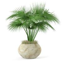 plant palm tree pot 3d max