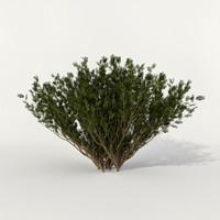 3d max bush