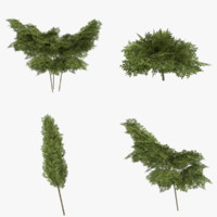 3d model ready shrub