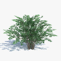 bush summer winter 3d model