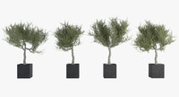 pack olive tree 3d max