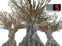 dragon tree 3d model