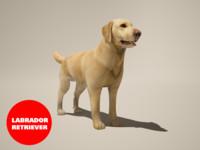 dog labrador 3d max