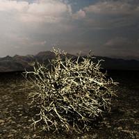 Tumbleweed - Max Scanline