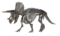 triceratops skeleton rigged 3d ma