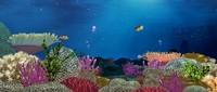 3d model ocean coral