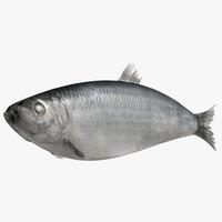 herring fish 3d max