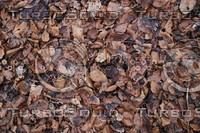 Ground_Texture_0012