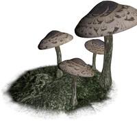 mushroom realistic 3d obj