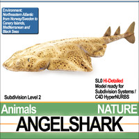 angelshark squatina 3d 3ds