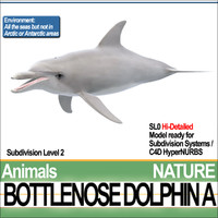 3ds max bottlenose dolphin