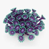 3d model poritidae coral