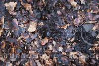 Ground_Texture_0023