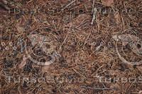 Ground_Texture_0015