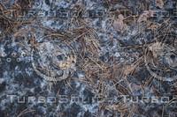 Ground_Texture_0016