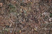 Ground_Texture_0025