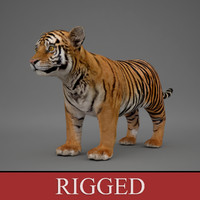 3d rigged baby tiger model