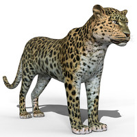 3d model amur leopard