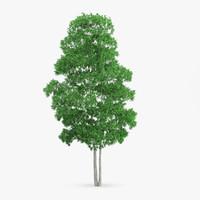 3d white birch 13 5m model