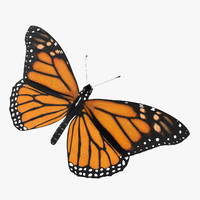 monarch butterfly 03 c4d