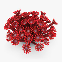 3d poritidae coral red animation model