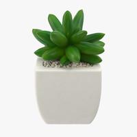 maya succulent 03