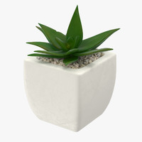 3d succulent 04