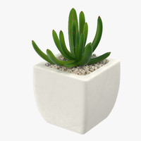 3d succulent 07 model
