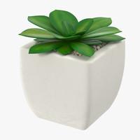 succulent 10 3d max