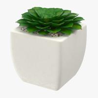 succulent 11 3d max