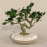 3ds bonsai realistic