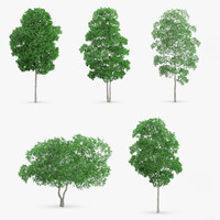 3d white birch trees model