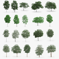 Birch Trees Collection