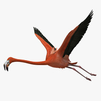 Flamingo 3D models