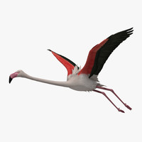 "Phoenicopterus Roseus ""Greater Flamingo"