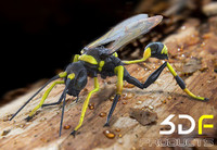 wasp mud dauber 3d model