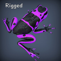 3d realistic poison frog rigged