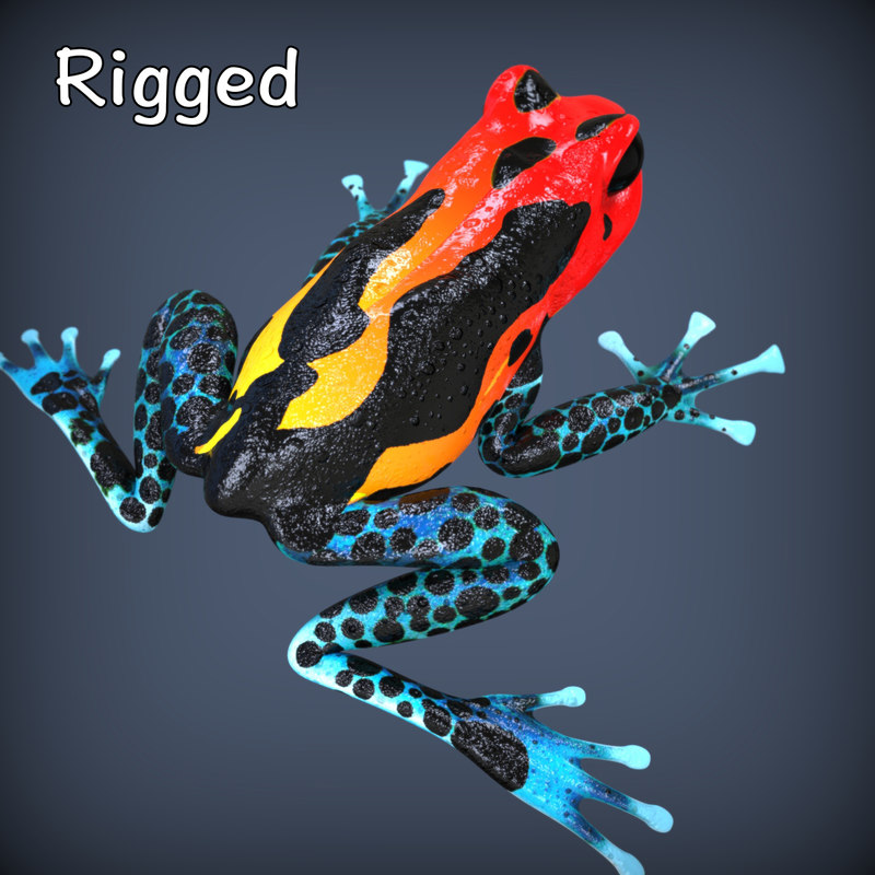 Frog.449.jpg