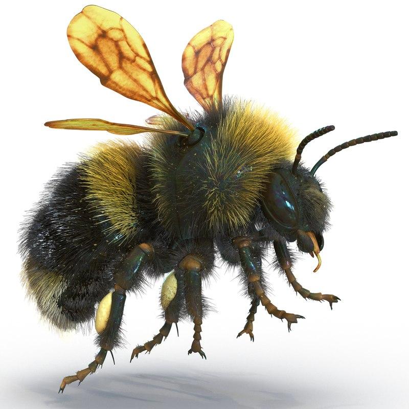 Bumblebee Rigged 3d model 01.jpg