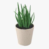 Succulent 19