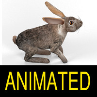 3d hare rigged cat model
