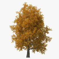 yellow poplar old tree 3ds
